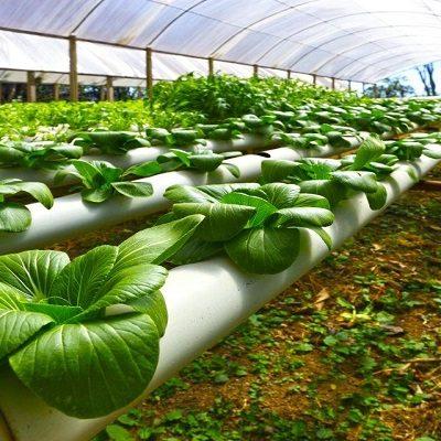بیوتکنولوژی کشاورزی