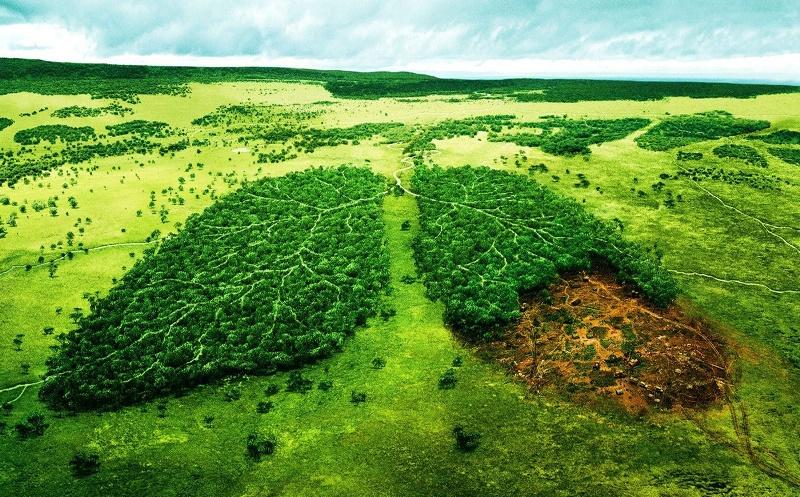 رشته علوم و مهندسی محیط زیست