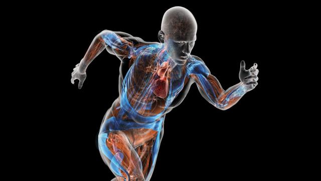 کتاب های رشته فیزیولوژی ورزشی گرایش فیزیولوژی فعالیت بدنی و تندرستی پیام نور