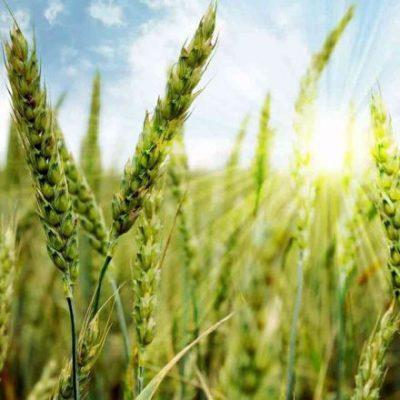 اقتصاد کشاورزی